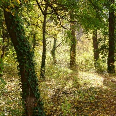 jesenná nálada v lesnej časti