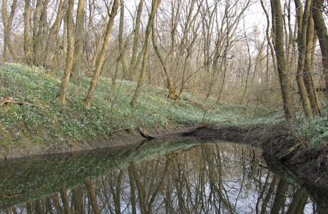 Zavodnené mŕtve rameno Dunaja